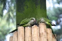 Dierenpark-Amersfoort-007-Papegaaien