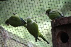 Dierenpark-Amersfoort-008-Papegaaien