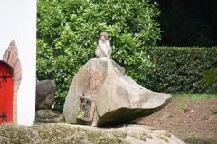 Dierenpark-Amersfoort-095-Japanse-makaak