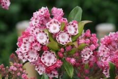 Floriade-2012-041-Roze-witte-bloemen