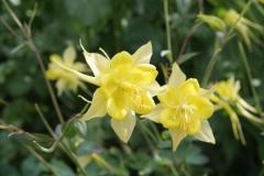 Floriade-2012-048-Gele-bloemen
