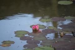 Floriade-2012-130-Paviljoen-China-Waterlelie