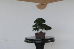 Floriade-2012-135-Paviljoen-China-Bonsai