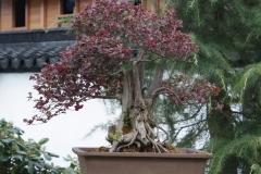Floriade-2012-142-Paviljoen-China-Bonsai