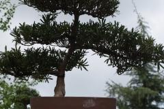 Floriade-2012-144-Paviljoen-China-Bonsai