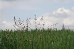 2012-Gras-in-Lemiers