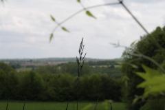 2012-Gras-in-Teuven-3