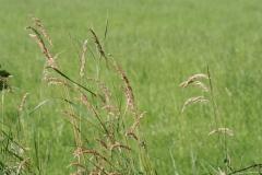 Bunde-022-Gras