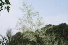 Sweijkhuizen-007-Bloeiend-gras