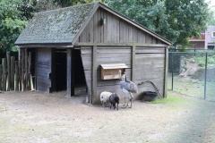 025-Nandoes-en-schapen