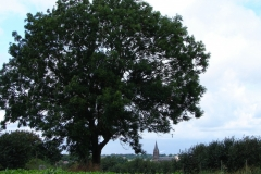Rondom-Kanne-071-Vergezicht-op-Maastricht