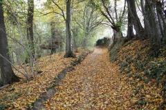 Strucht-e.o.-027-Landweg-in-de-herfstkleuren