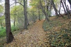 Strucht-e.o.-028-Landweg-in-de-herfstkleuren