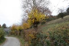 Strucht-e.o.-111-Herfstlandschap