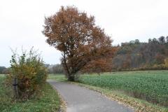 Strucht-e.o.-125-Herfstlandschap-met-boom