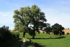 Trintelen-Eys-050-Vergezicht-met-bomen