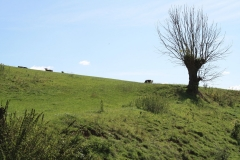 Trintelen-Eys-051-Vergezicht-met-boom-en-koeien