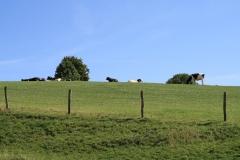 Trintelen-Eys-057-Vergezicht-met-koeien
