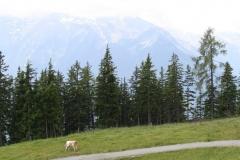 Bramberg-086-Berglandschap