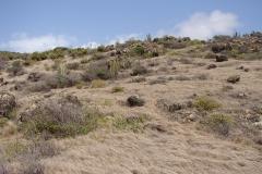 St.-Maarten-0338-Cactuslandschap