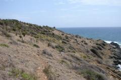 St.-Maarten-0341-Cactuslandschap