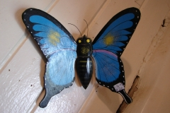 St.-Maarten-0860-The-Butterfly-Farm-Vlinder-van-hout
