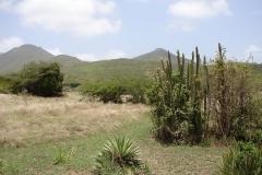 St.-Maarten-0895-The-Butterfly-Farm-Landschap