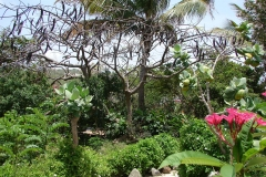 St.-Maarten-0897-The-Butterfly-Farm-Tuin