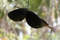 St.-Maarten-0900-The-Butterfly-Farm-Vogel-op-voerbakje