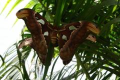 St.-Maarten-0920-The-Butterfly-Farm-De-grootste-mot-ter-wereld