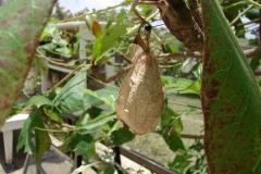St.-Maarten-0924-The-Butterfly-Farm-Pop