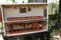 St.-Maarten-0931-The-Butterfly-Farm-Poppen-en-vlinders