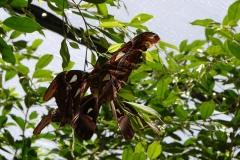 St.-Maarten-0932-The-Butterfly-Farm-De-grootste-mot-ter-wereld