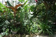 St.-Maarten-0939-The-Butterfly-Farm-Tropische-planten