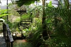 St.-Maarten-0960-The-Butterfly-Farm