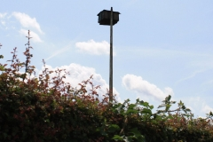 Sint-Geertruid-Moerslag-081-Roofvogelkast