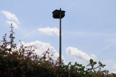 Sint-Geertruid-Moerslag-082-Roofvogelkast