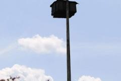 Sint-Geertruid-Moerslag-083-Roofvogelkast