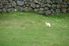 St.-Maarten-0809-Loterie-Farms-Ibis