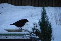 Winter-2008-Merel-02
