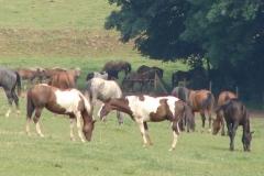 Meerssen-Raar-132-Paarden-in-de-wei