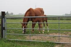 Spaubeek-001-Paard-en-veulen