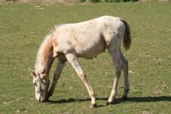 Windraak-010-Paard-met-stippen